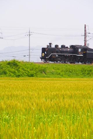 20160508kitabiwako5.JPG